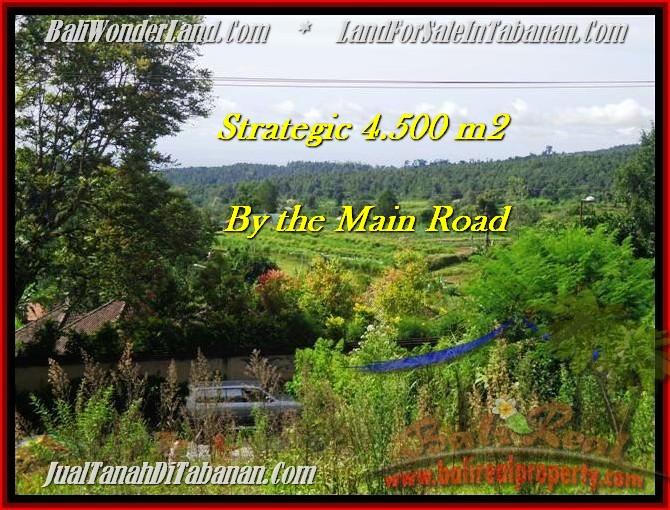 Magnificent PROPERTY 4,500 m2 LAND IN Tabanan Bedugul FOR SALE TJTB193