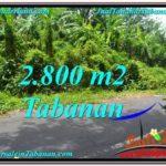 Beautiful 2,800 m2 LAND SALE IN TABANAN BALI TJTB300