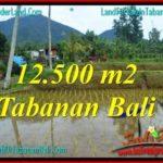 Affordable PROPERTY Tabanan Penebel LAND FOR SALE TJTB317