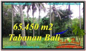 Exotic PROPERTY 65,450 m2 LAND FOR SALE IN Tabanan Selemadeg TJTB290
