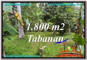 Tabanan Penebel BALI LAND FOR SALE TJTB293