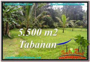Affordable LAND SALE IN Tabanan Penebel BALI TJTB295