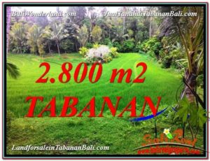 FOR SALE Magnificent 2,800 m2 LAND IN TABANAN BALI TJTB333