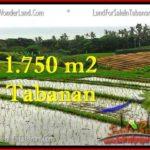 Affordable PROPERTY 1,775 m2 LAND FOR SALE IN Tabanan Selemadeg TJTB264