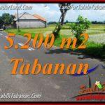 Affordable 5,200 m2 LAND FOR SALE IN TABANAN BALI TJTB351