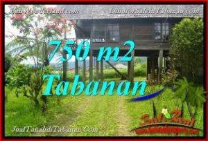 FOR SALE Affordable PROPERTY 750 m2 LAND IN Tabanan Bedugul BALI TJTB370