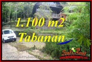Beautiful PROPERTY 1,100 m2 LAND FOR SALE IN TABANAN Bedugul BALI TJTB371