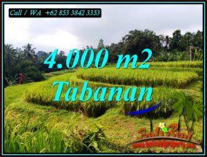 FOR SALE 4,000 m2 LAND IN PENEBEL TABANAN TJTB499A