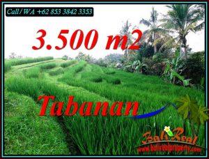Beautiful 3,500 m2 LAND SALE IN SELEMADEG TIMUR TABANAN BALI TJTB500