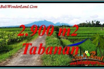 Beautiful PROPERTY LAND FOR SALE IN SELEMADEG BALI TJTB484