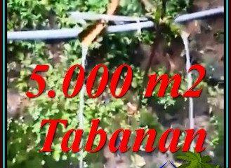 FOR SALE Exotic 5,000 m2 LAND IN PENEBEL BALI TJTB476